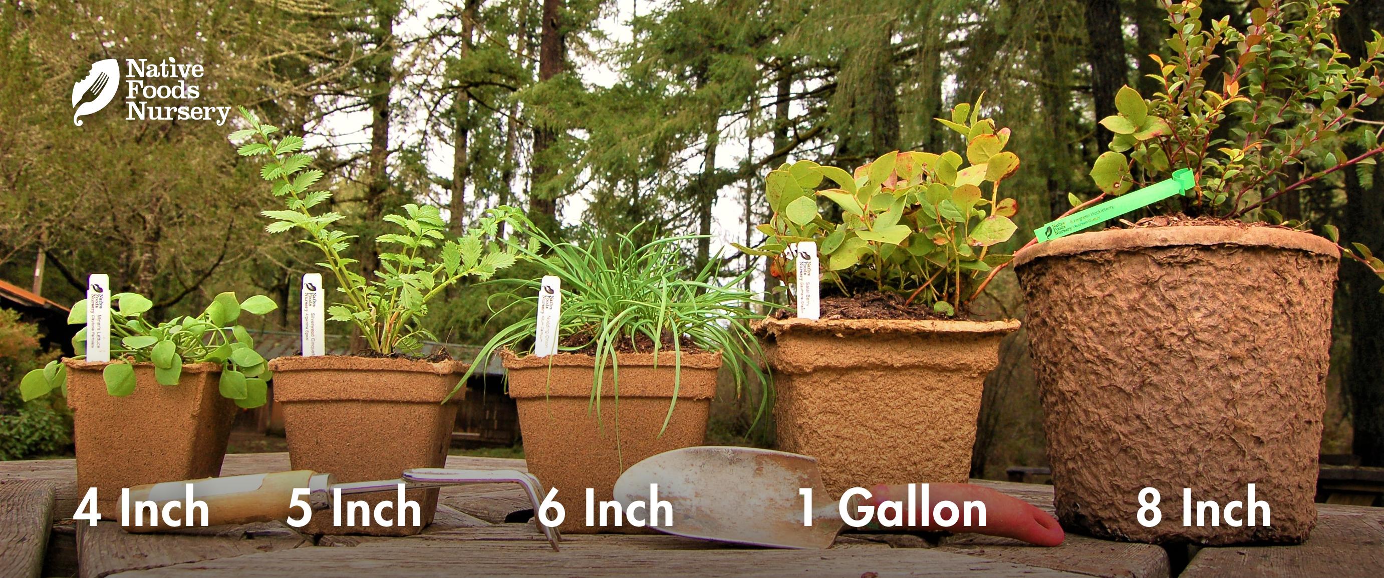 pot-sizes-sideview.jpg